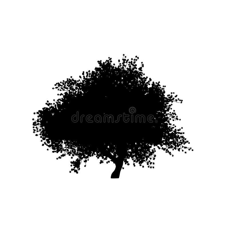 Kontur för Sakura trädsvart på vit bakgrund stock illustrationer