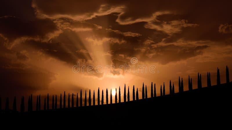 Kontur för Tuscany berömd cypressträd på solnedgången på en sommardag royaltyfri fotografi