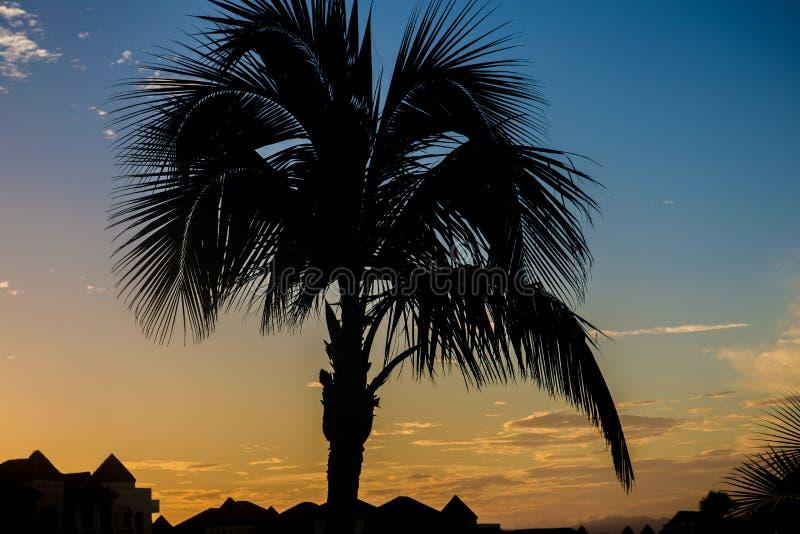 Kontur från en palmträd på soluppgång fotografering för bildbyråer