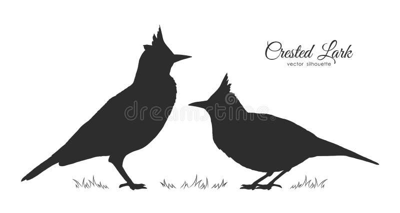 Kontur två av den krönade lärkan fåglar little stock illustrationer