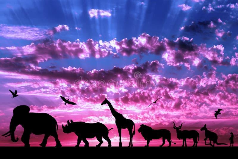 Konturer av djur på purpurfärgad molnig solnedgång arkivfoton