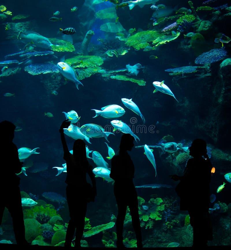 Konturer av folk mot bakgrunden av ett stort akvarium royaltyfria foton