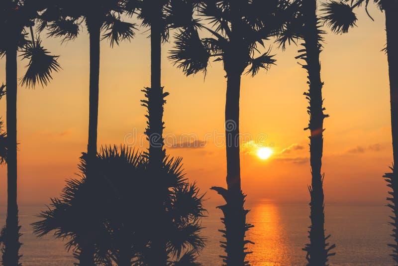Konturer av palmträd och det härliga havet under solnedgång i Thailand, Phuket royaltyfri bild