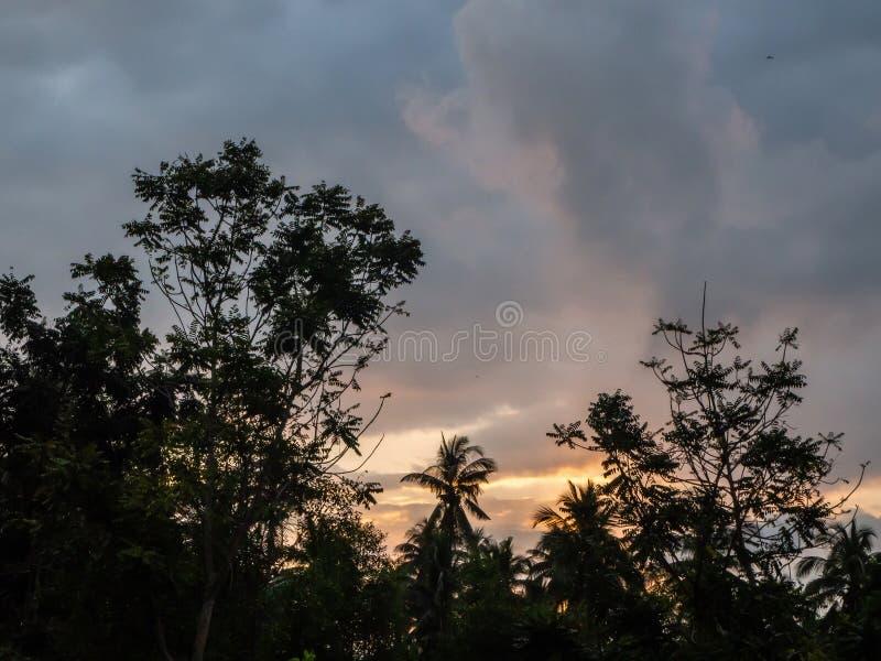 Konturer av tr?d mot den bl?a himlen och def?rgade molnen royaltyfria foton
