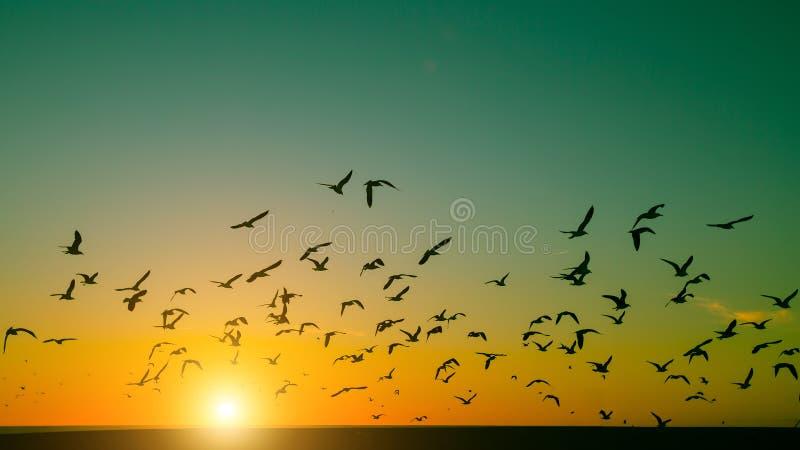 Konturflock av fåglar över Atlanticet Ocean under solnedgång arkivbilder