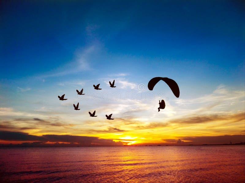 Konturflygfåglar och para bilar över havssolnedgånghimmel arkivfoto