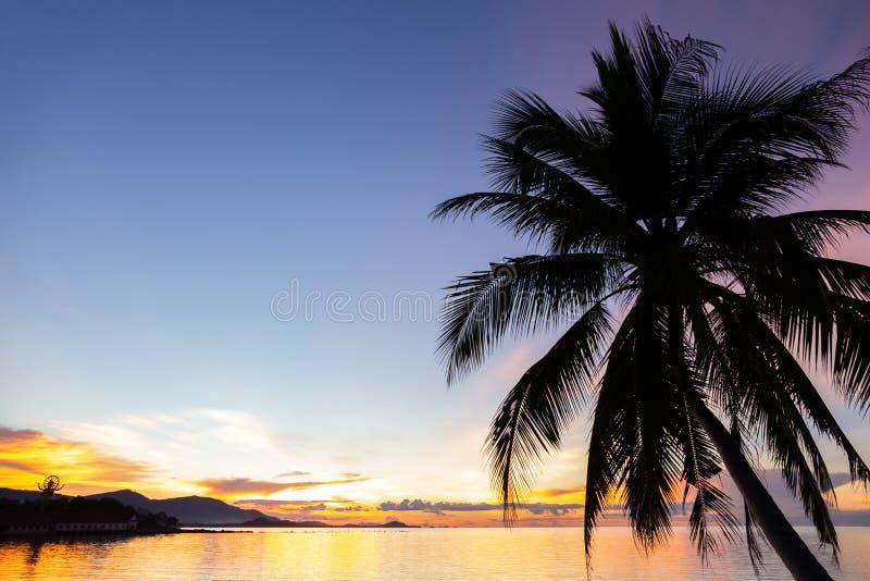 Konturkokosnötpalmträd med solnedgång över havet i koh sam royaltyfria foton