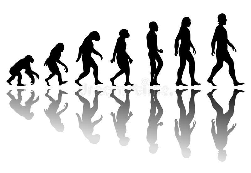 Konturmanevolution stock illustrationer