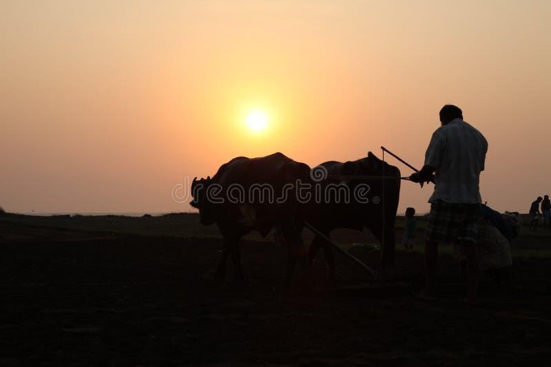 Konturn av en bonde plogar hans fält med ett par av buffeln i förberedelse som planterar i Indien arkivbilder