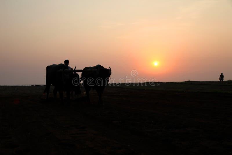 Konturn av en bonde plogar hans fält med ett par av buffeln i förberedelse som planterar i Indien royaltyfri fotografi