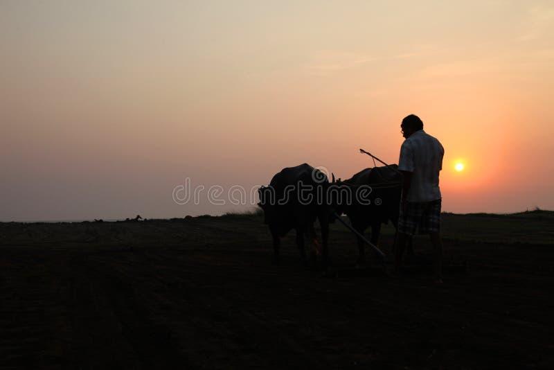 Konturn av en bonde plogar hans fält med ett par av buffeln i förberedelse som planterar i Indien arkivfoto