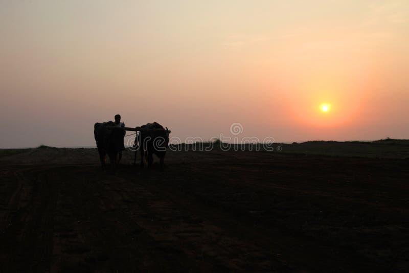 Konturn av en bonde plogar hans fält med ett par av buffeln i förberedelse som planterar i Indien royaltyfri bild