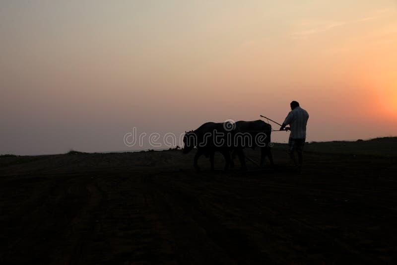 Konturn av en bonde plogar hans fält med ett par av buffeln i förberedelse som planterar i Indien royaltyfria bilder