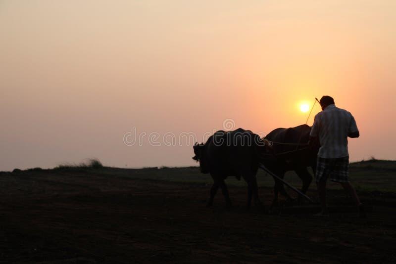 Konturn av en bonde plogar hans fält med ett par av buffeln i förberedelse som planterar i Indien fotografering för bildbyråer