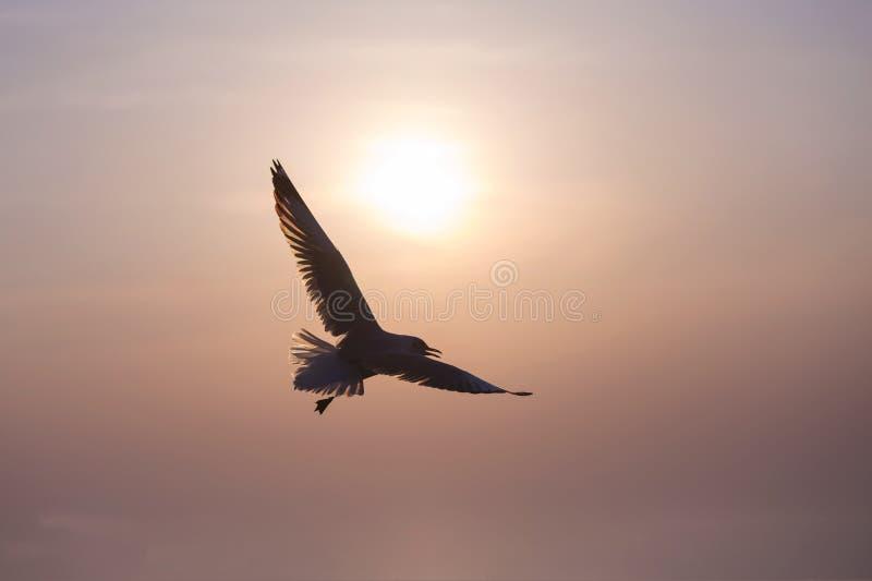 Konturn av en flygaseagull arkivbild