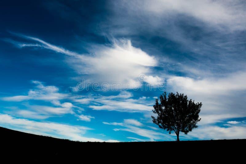 Konturn av ett ungt enkelt träd, dramatisk vibrerande blå himmel med vit fördunklar minimalist landskap fotografering för bildbyråer