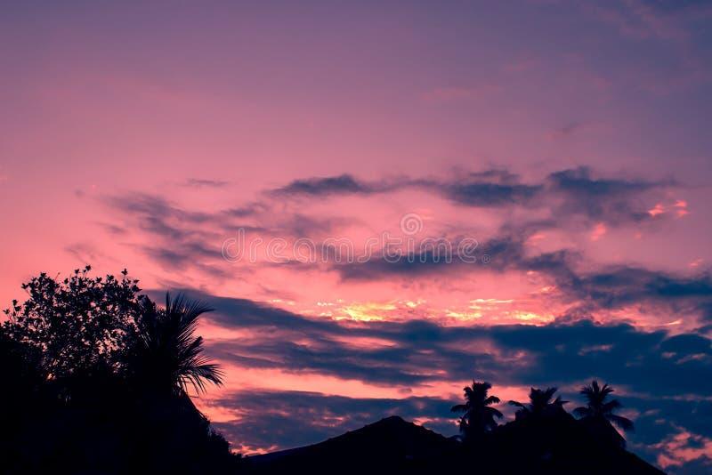 Konturn av träd under solnedgången royaltyfri bild