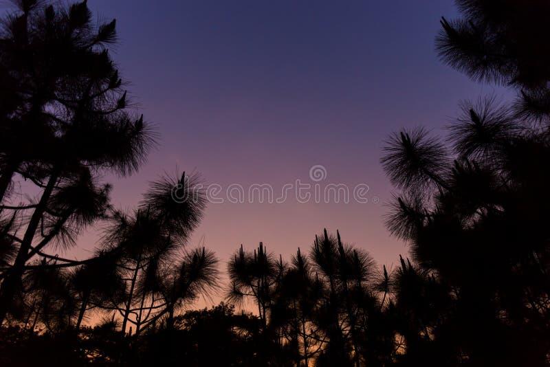 Konturn sörjer träd i solnedgångtid fotografering för bildbyråer