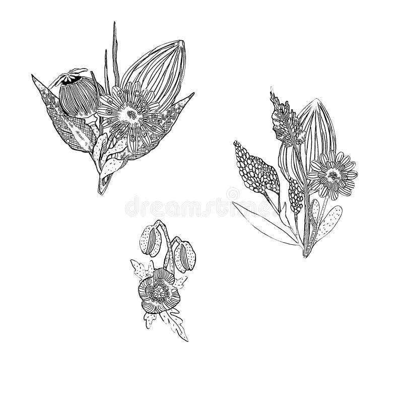 Konturowi rysunkowi bukiety z dzikimi kwiatami royalty ilustracja