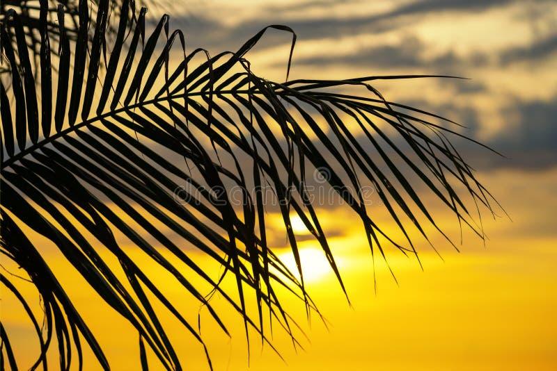 Konturpalmblad på för havshav för himmel den neary stranden på solnedgång- eller soluppgångtid för fritidlopp och semesterbegrepp arkivbilder