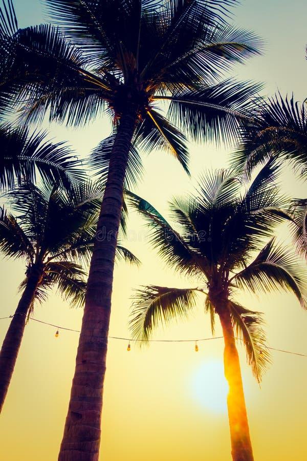 Konturpalmträd med solnedgång arkivfoton