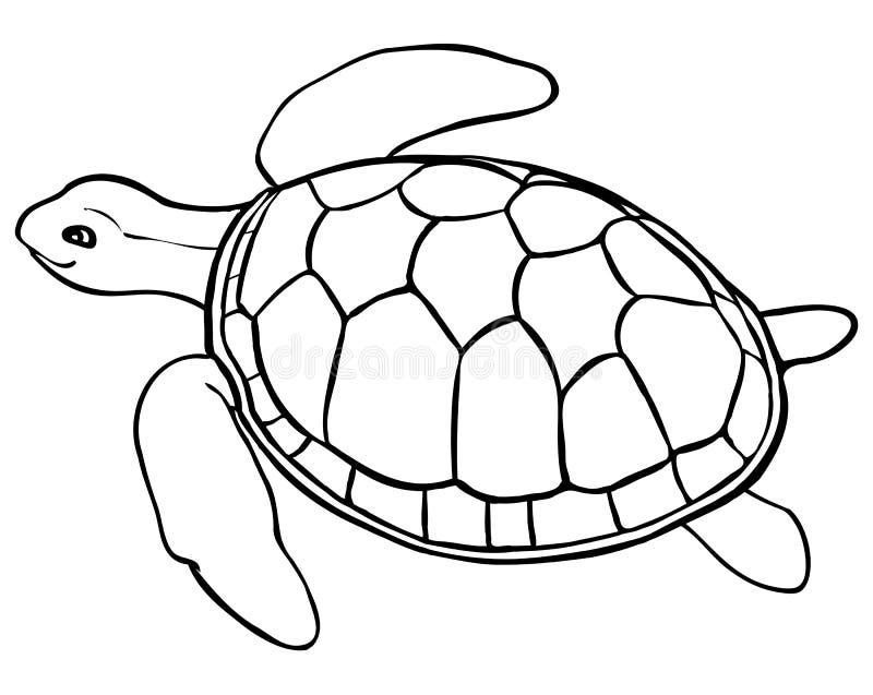 Kontursköldpadda - färga sidan för ungar vektor illustrationer