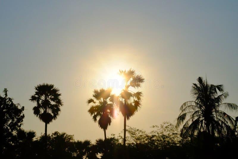 Kontursolnedgång över sockerpalmträd med guld- himmel på skymning arkivfoton