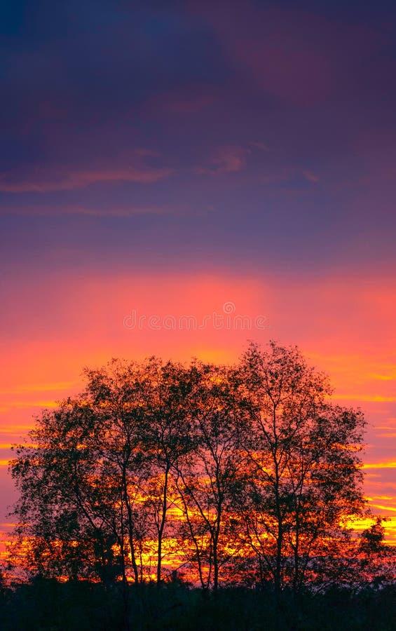 Konturträd med röd färgglad himmel royaltyfri foto
