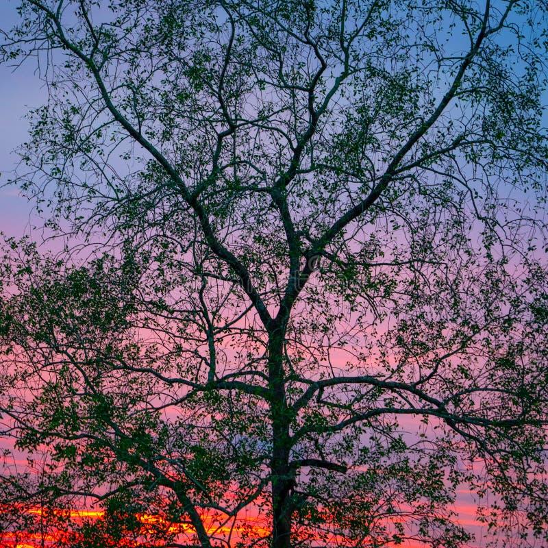 Konturträd med röd färgglad himmel fotografering för bildbyråer