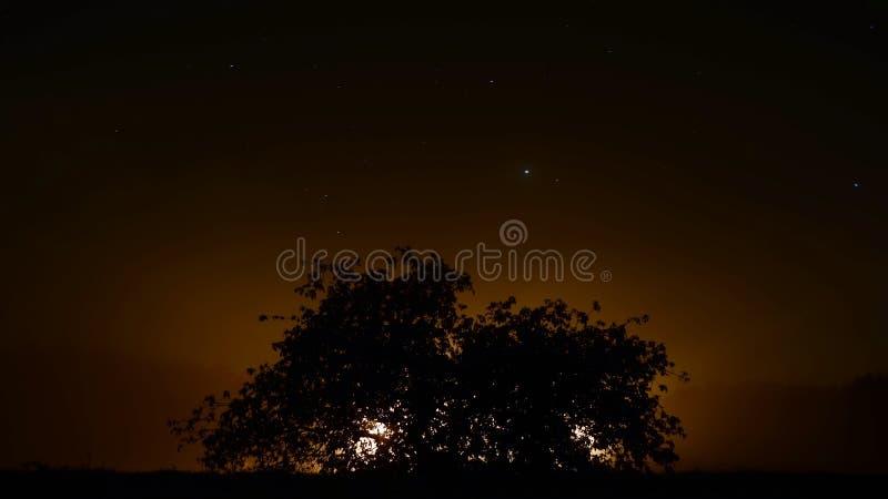 Konturträd/solnedgångträd fotografering för bildbyråer