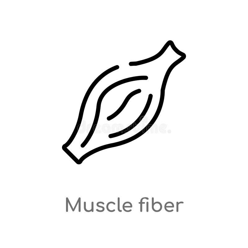 konturu mięśnia włókna wektoru ikona odosobniona czarna prosta kreskowego elementu ilustracja od ciało ludzkie części pojęcia Edi ilustracja wektor