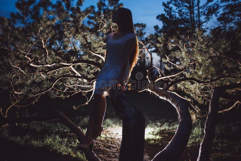 Konturung flicka på gammal trädfilial i mystisk felik nattskog arkivbild