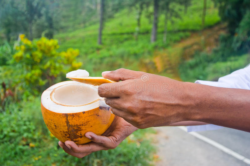 Konung Coconut royaltyfri fotografi