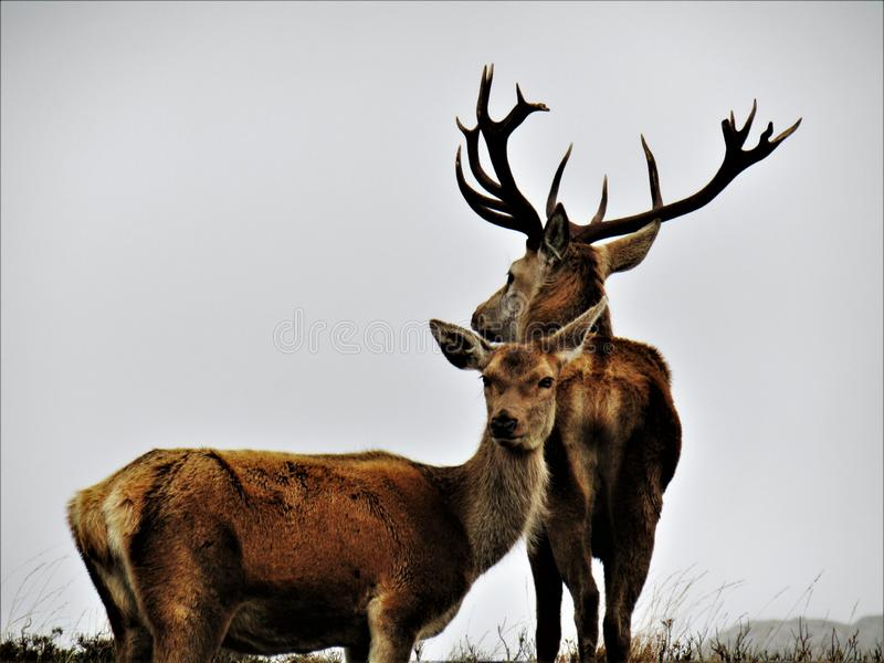 Konung och drottning av Skotska högländerna arkivfoton