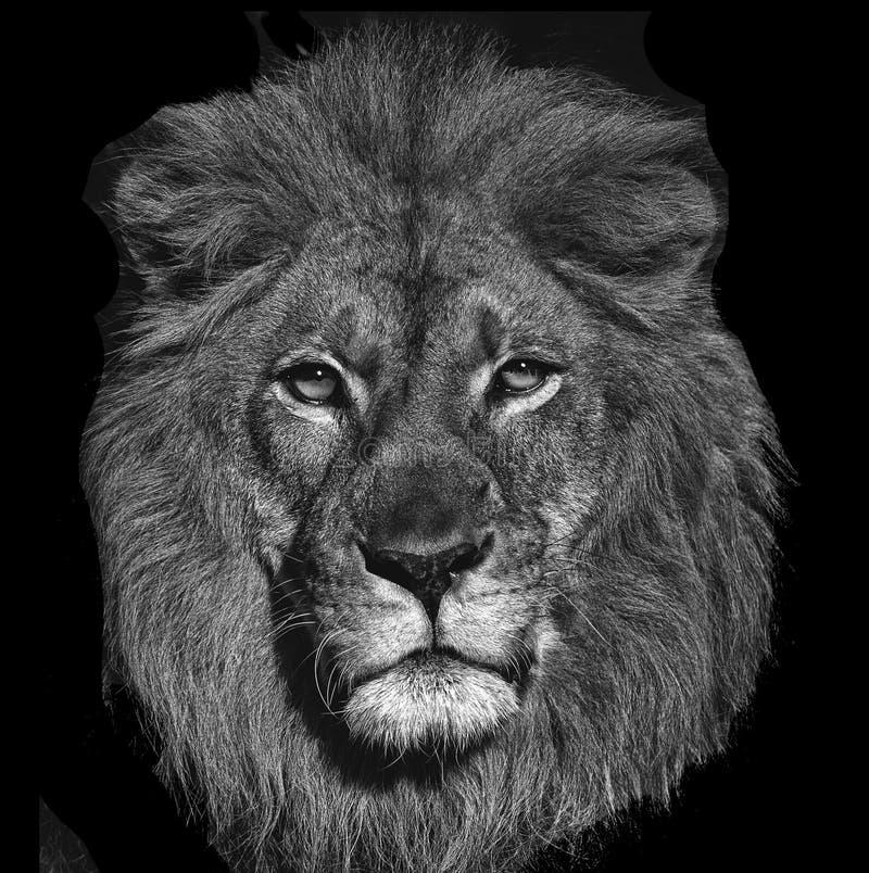 Konungen av djungeln royaltyfri bild