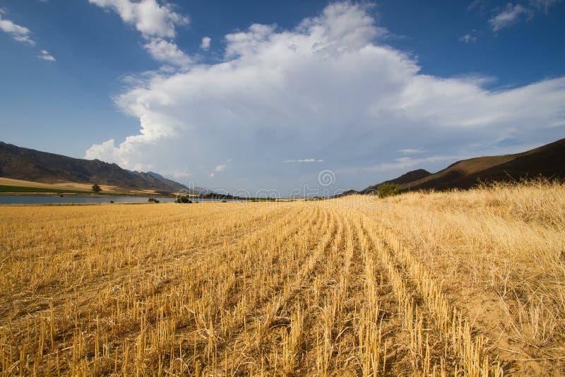 Konvergera buktigt jordbruks- landskap arkivbilder