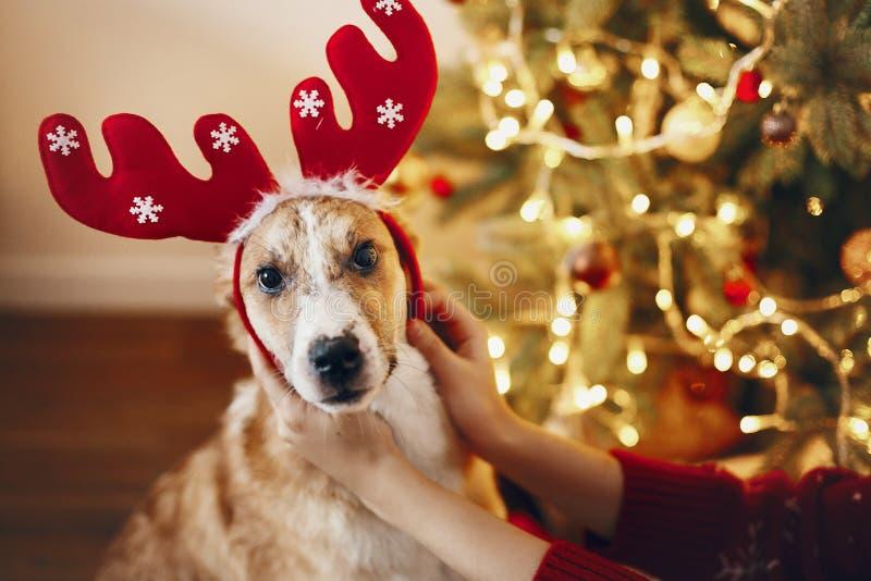 Konzept der frohen Weihnachten und des guten Rutsch ins Neue Jahr netter Hund im Ren stockfoto