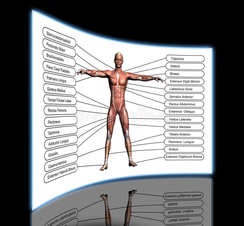 Nett Verbinden Die Menschliche Anatomie Fotos - Anatomie Ideen ...