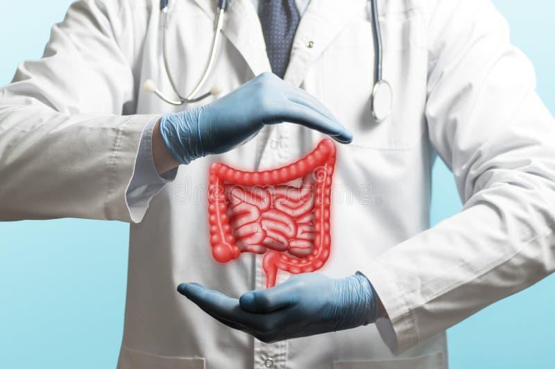 Konzept des gesunden Darms stockfotografie