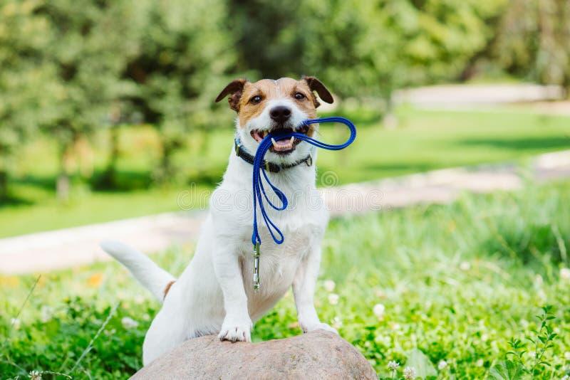 Konzept des glücklichen Morgenspaziergangs mit einem Hund am Park lizenzfreies stockbild