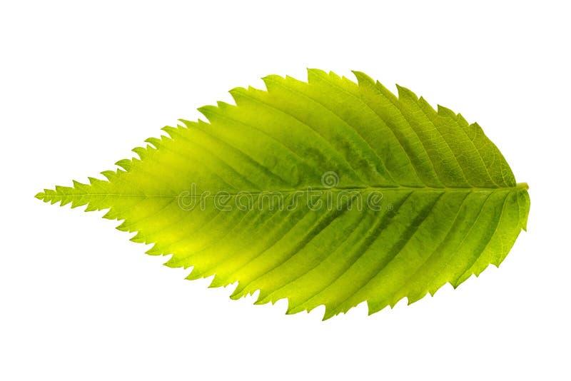 Konzept des Klimawandels und der globalen Erwärmung Brennende Blattmetapherdürre und grünes Blatt lizenzfreies stockfoto