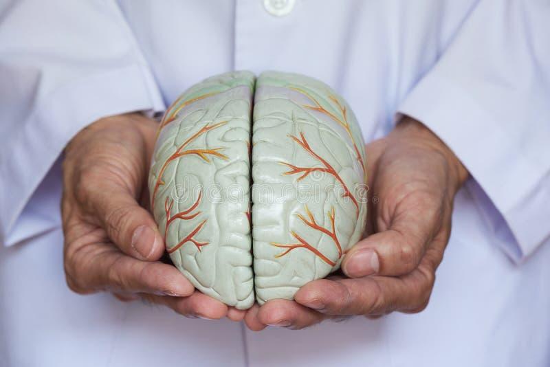 Konzept von Doktor das Gehirn mach's gut stockfotos