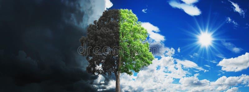 Konzeptbaum wachsend und trocken mit Himmel- und Sonnenhintergrund lizenzfreies stockfoto