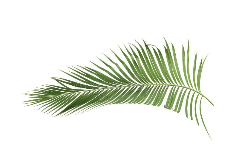 Konzeptsommer mit grünem Palmblatt von tropischem Wedel mit Blumen stockfotografie