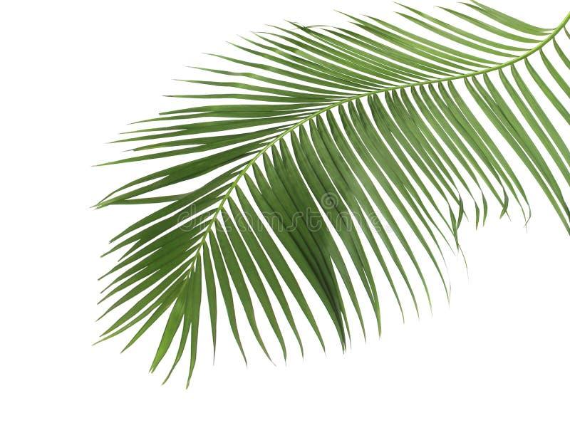 Konzeptsommer mit grünem Palmblatt von tropischem Wedel mit Blumen lizenzfreie stockfotografie