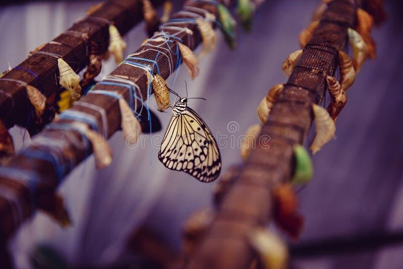 Konzeptumwandlung Schmetterling stockbild