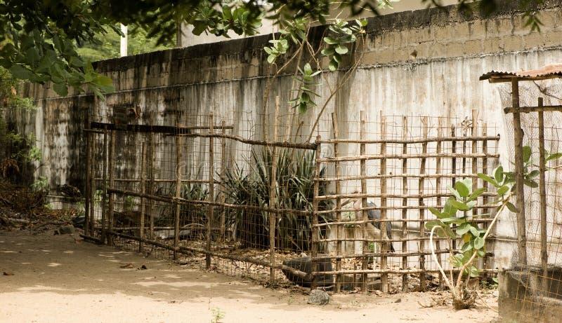Kooi bij een dierentuin stock afbeeldingen