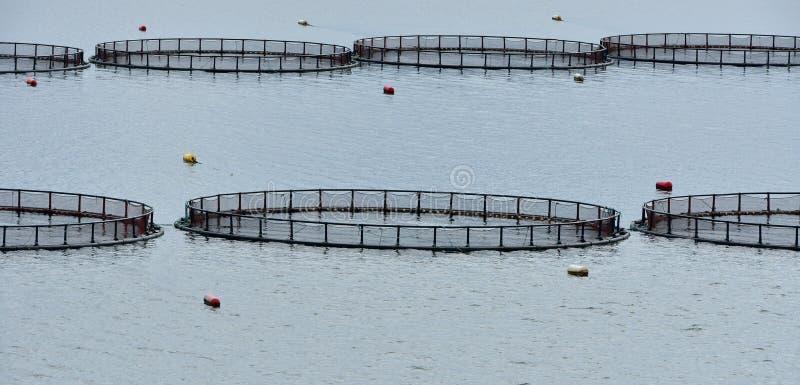 Kooien voor kweken van vis royalty-vrije stock fotografie