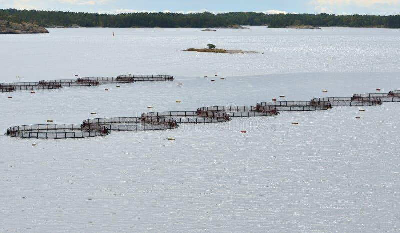 Kooien voor kweken van vis royalty-vrije stock foto's