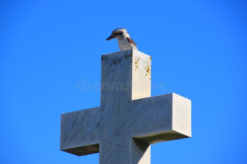Kookaburra riant photos libres de droits